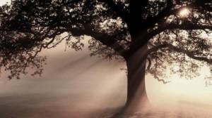 _88104392_b6010524-oak_tree_at_sunrise-spl